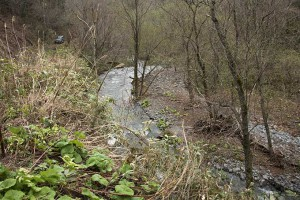 2015-04-21・加工済・見市川支流冷水川・KAZ_0157