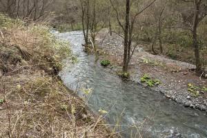 2015-04-21・加工済・見市川支流冷水川・KAZ_0163