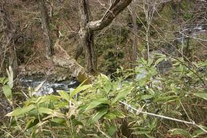 2015-04-21・加工済・見市川支流冷水川・KAZ_0182
