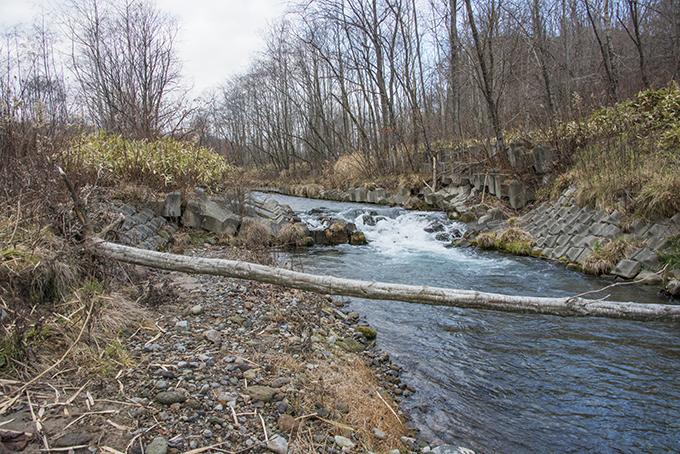 巨大スリットダムの下流には多くの落差工が設置されている。落差工の下流でも川底が下がり、川岸が崩れている。落差工が川を壊している姿だ。2015年11月20日